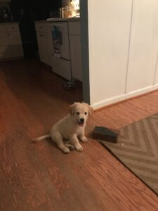 puppy with a brick, favorite dog toy