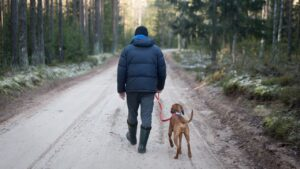 dog gear you need while camping